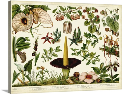 Tropical Botany Chart III