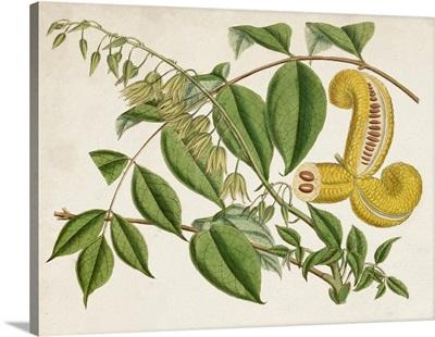 Tropical Foliage & Fruit I