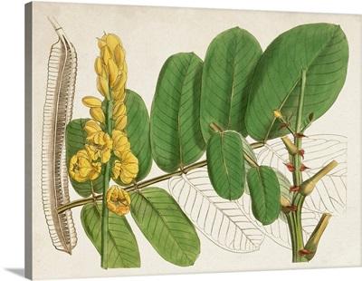 Tropical Foliage & Fruit II