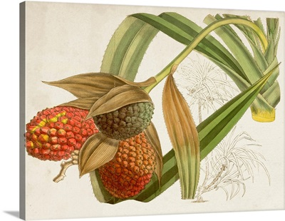 Tropical Foliage & Fruit III