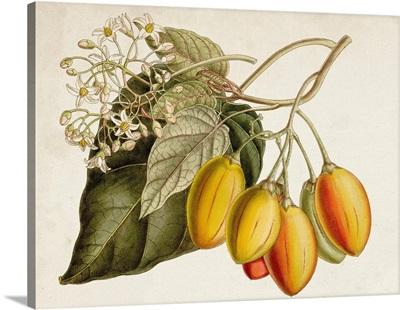 Tropical Foliage & Fruit IV