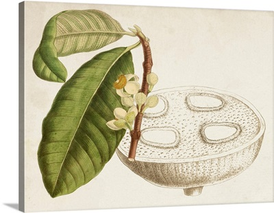 Tropical Foliage & Fruit VII