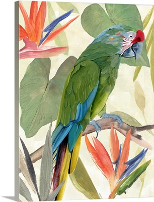 Tropical Parrot Composition I