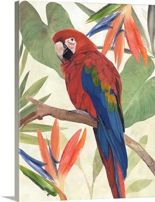 Tropical Parrot Composition II
