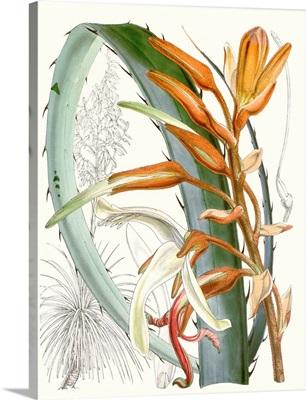 Tropical Variety III