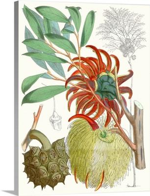 Tropical Variety IV