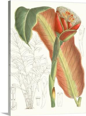 Tropical Variety VII