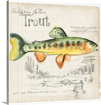 Trout Journal IV