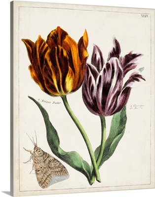 Tulip Classics I