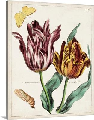 Tulip Classics II