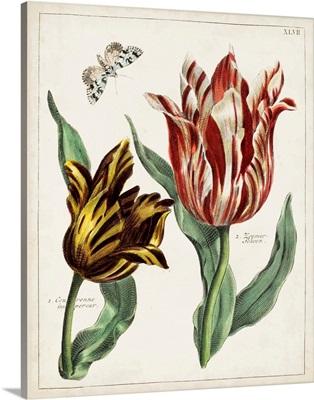 Tulip Classics IV