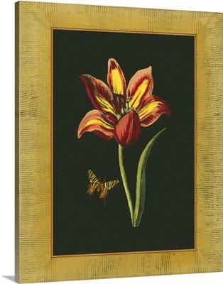 Tulip in Frame I