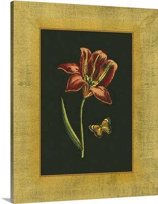 Tulip in Frame II