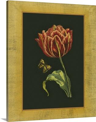 Tulip in Frame III