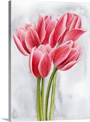 Tulip Tangle II