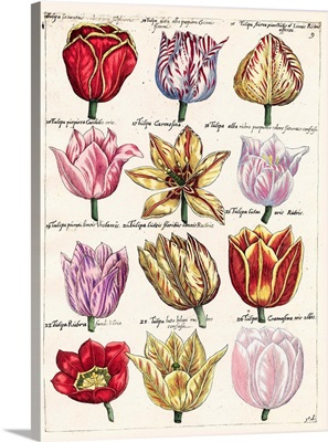 Tulips En Masse I