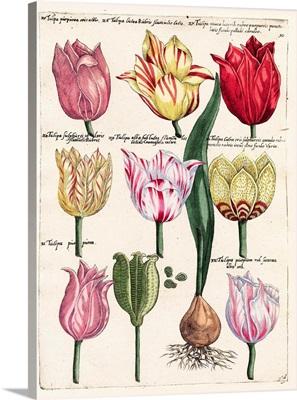 Tulips En Masse II