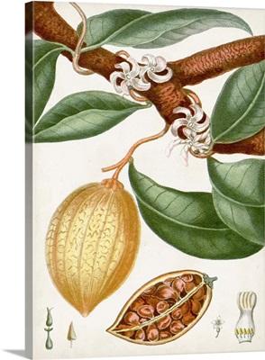 Turpin Tropical Fruit II