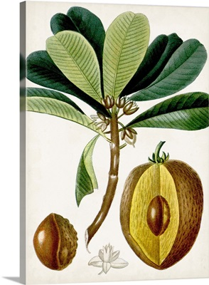 Turpin Tropical Fruit VI