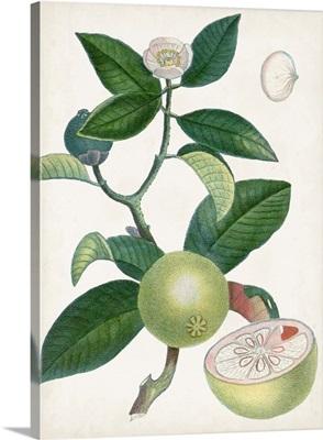 Turpin Tropical Fruit XI