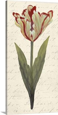 Twin Tulips I