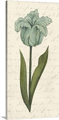 Twin Tulips VI