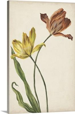 Two Tulips I