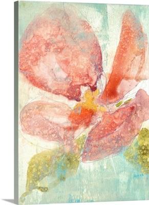 Veiled Poppy II