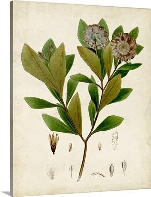 Verdant Foliage V