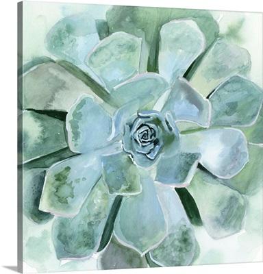 Verdant Succulent III