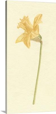Vintage Daffodil I