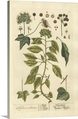 Vintage Foliage II