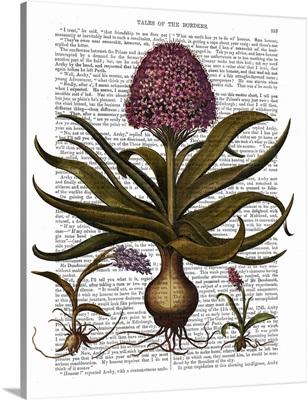 Vintage Hyacinth