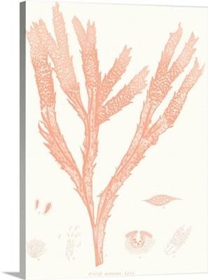 Vivid Coral Seaweed II