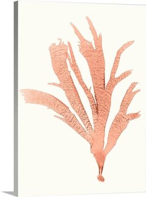 Vivid Coral Seaweed IV