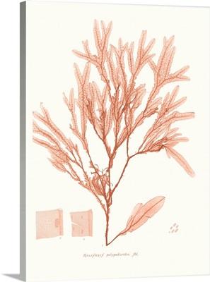 Vivid Coral Seaweed V