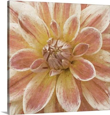 Wall Flower V