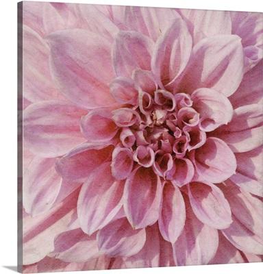 Wall Flower VII