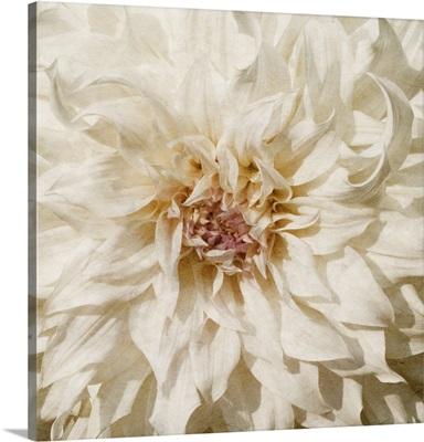 Wall Flower VIII