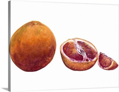 Watercolor Blood Orange