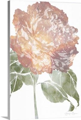 Watercolor Bloom I