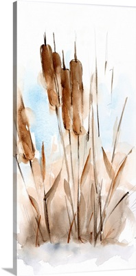 Watercolor Cattail Study I