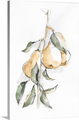 Watercolor Fruit Contour I