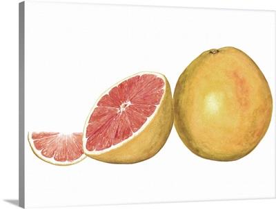 Watercolor Grapefruit