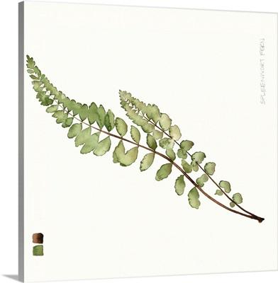 Watercolor Leaf Study I
