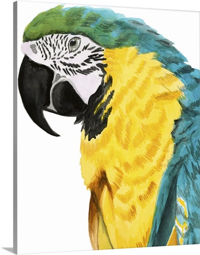 Watercolor Parrot Wall Art, Canvas Prints, Framed Prints, Wall Peels ...