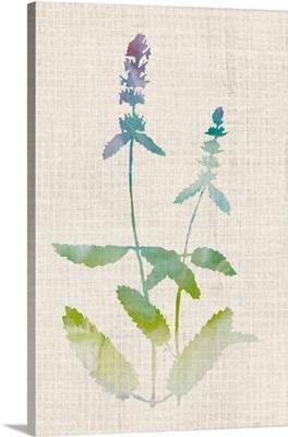 Watercolor Plants IV