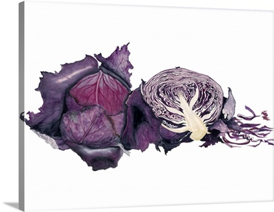 Watercolor Purple Cabbage
