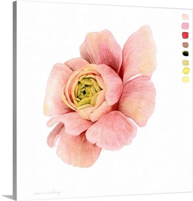 Watercolor Ranunculus Study II
