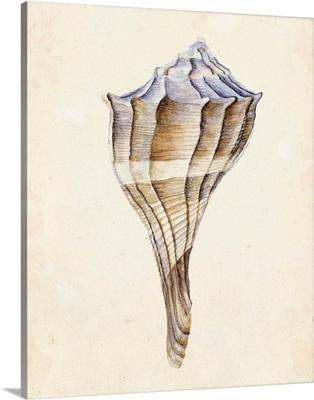 Watercolor Seashell I